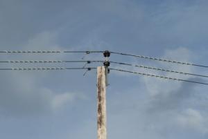 Telegrafenmast